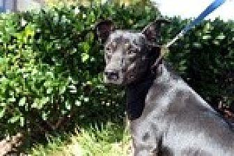 Shepherd (Unknown Type) Mix Dog for adoption in Newnan, Georgia - Fruitcake