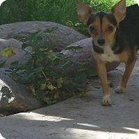 Adopt A Pet :: Precious - Scottsdale, AZ