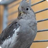 Adopt A Pet :: Alexandra - Denver, CO