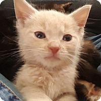 Adopt A Pet :: Winston - Pottstown, PA