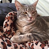 Adopt A Pet :: Marbles - Santa Monica, CA