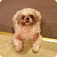 Adopt A Pet :: Cinnamon - Urbana, OH