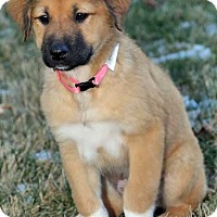 Adopt A Pet :: Emerald in CT / pup - pending - Beacon, NY