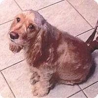 Adopt A Pet :: Rocky COURTESY POST - Hewitt, NJ