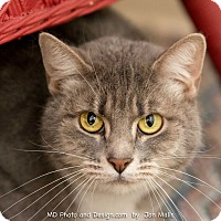 Adopt A Pet :: Sarah II - Fountain Hills, AZ