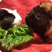 Adopt A Pet :: Dani - Steger, IL