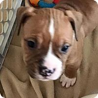 Adopt A Pet :: Twoffer - Las Vegas, NV
