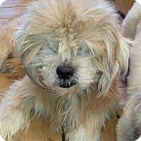 Adopt A Pet :: Walter - Oakdale, TN