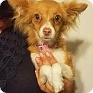 Adopt A Pet :: Gia