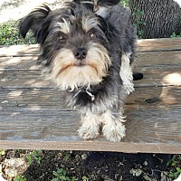 Adopt A Pet :: BUBBA- HAS BEEN ADOPTED - Frisco, TX