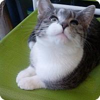 Adopt A Pet :: Skye* - Brooklyn, NY