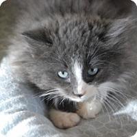 Adopt A Pet :: Winter - Polson, MT