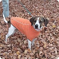 Adopt A Pet :: CeCe - West Palm Beach, FL