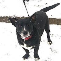 Adopt A Pet :: Delbert - Bardonia, NY