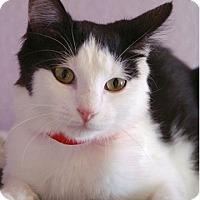 Adopt A Pet :: Fluffy - Englewood, FL