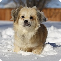 Adopt A Pet :: Jade - Ile-Perrot, QC