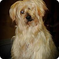 Adopt A Pet :: Mopsy - N. Babylon, NY