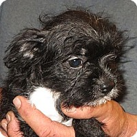 Adopt A Pet :: Cambry - Greenville, RI