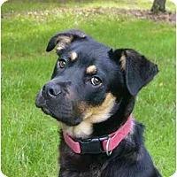 Adopt A Pet :: Preacher - Mocksville, NC