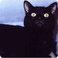 Adopt A Pet :: Minuet - Medway, MA