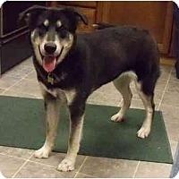 Adopt A Pet :: Jade - Belleville, MI