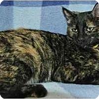 Adopt A Pet :: Eva - Pendleton, OR