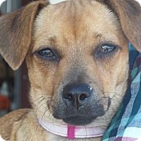Adopt A Pet :: Penelope - Arenas Valley, NM