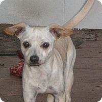 Adopt A Pet :: Cisco - Orlando, FL