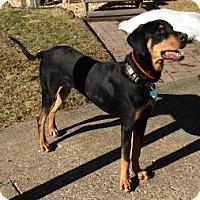 Adopt A Pet :: Boone - Rockaway, NJ