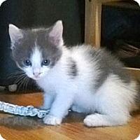 Adopt A Pet :: Star - Kirkwood, DE
