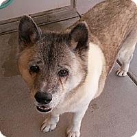 Adopt A Pet :: Jessie - Hayward, CA