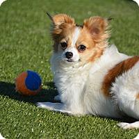 Adopt A Pet :: Grace - Meridian, ID