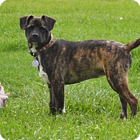 Adopt A Pet :: Lena - Marietta, GA