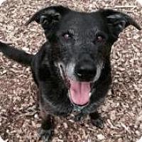 Adopt A Pet :: Heidi - Briarcliff Manor, NY