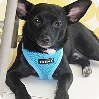 Adopt A Pet :: Ethan - West LA, CA