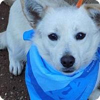 Adopt A Pet :: Avalanche-ADOPTED 2/6/15 - Apple Valley, CA