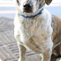 Adopt A Pet :: Tiger - Marietta, GA