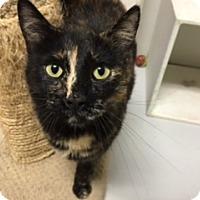 Adopt A Pet :: Carmella - Diamond Springs, CA