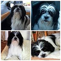 Adopt A Pet :: Kramer - Cary, NC