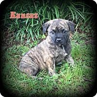 Adopt A Pet :: Kansas - Denver, NC