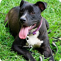Adopt A Pet :: Leia Michelle - Richmond, VA