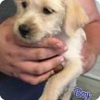 Adopt A Pet :: Shamus - Rexford, NY