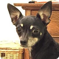 Adopt A Pet :: Jollie-adopted - Schaumburg, IL