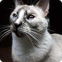 Adopt A Pet :: Gypsy - Santa Cruz, CA