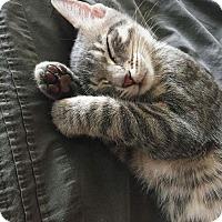 Adopt A Pet :: Axl - Columbus, OH