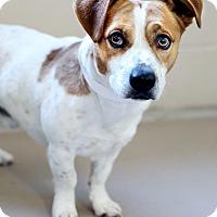 Adopt A Pet :: Debo *REBOUND* - Appleton, WI