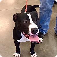 Adopt A Pet :: Emory-URGENT - Allen town, PA