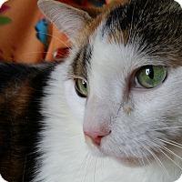 Adopt A Pet :: Lotta - Berlin, CT
