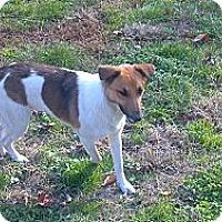 Adopt A Pet :: Colby - Hazard, KY