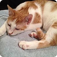Adopt A Pet :: Fagan - East Hanover, NJ